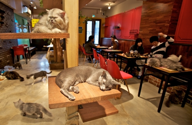 Cat Cafe Melbourne now accepting job applications