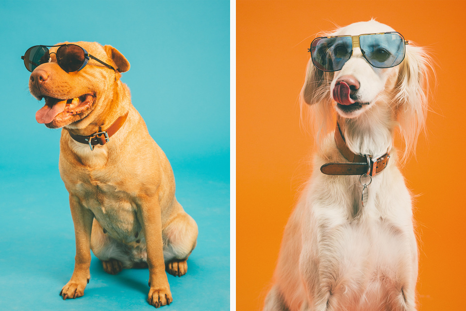 High Snobiety casts canines in 'Dawgs of Summer' editorial