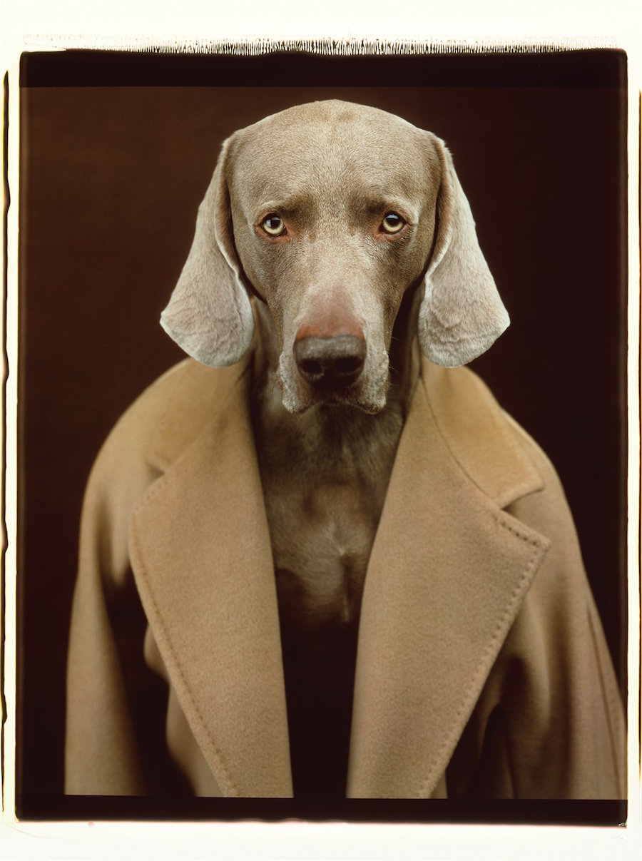 Max Mara's latest shoot is adorable, uses dogs as models