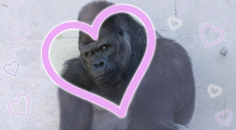 Hot Gorilla lands a starring movie role