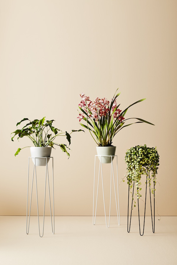 The FJ Guide to: Indoor Greenery