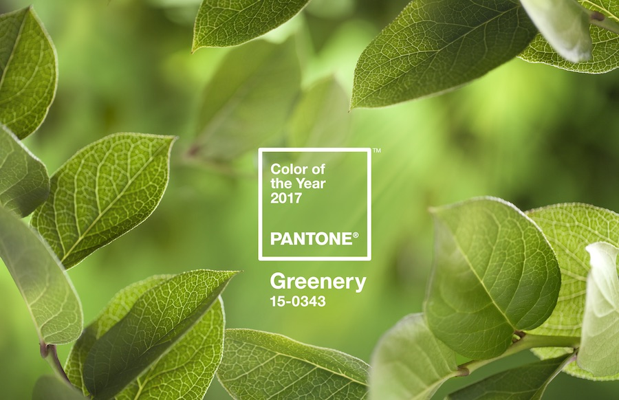 Drum roll please, Pantone's 2017 Colour of the Year is here