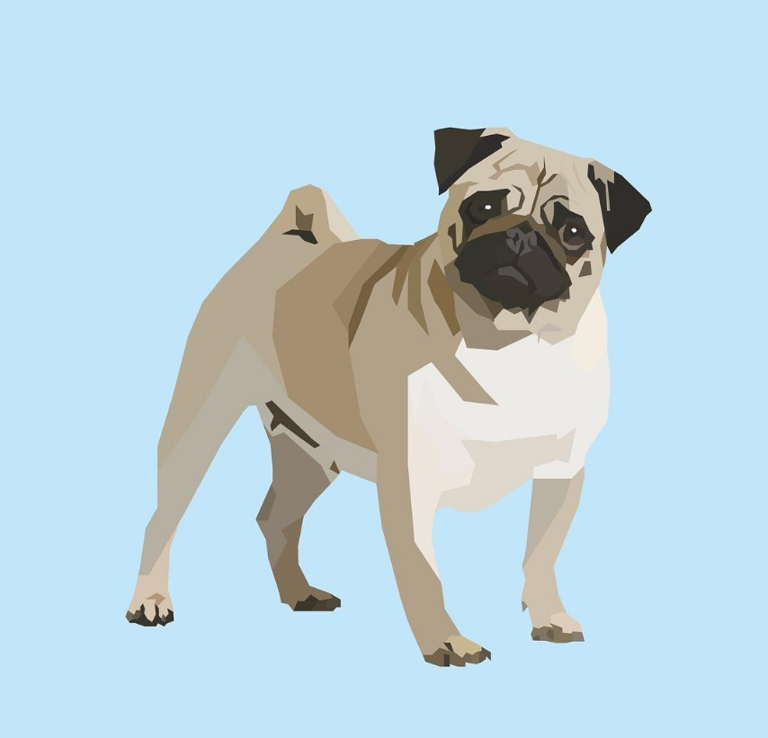 DG Designs now specialises in portraits of your puppers