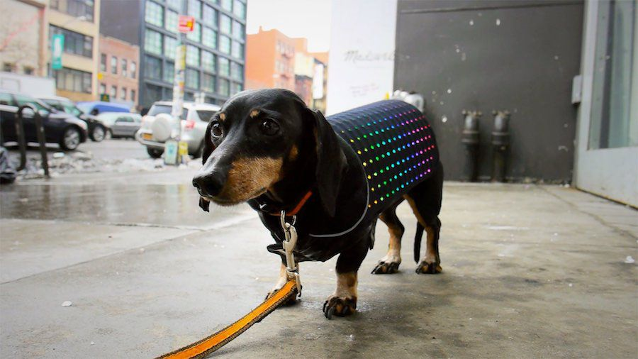 You can now spoil your dog with this light-up vest