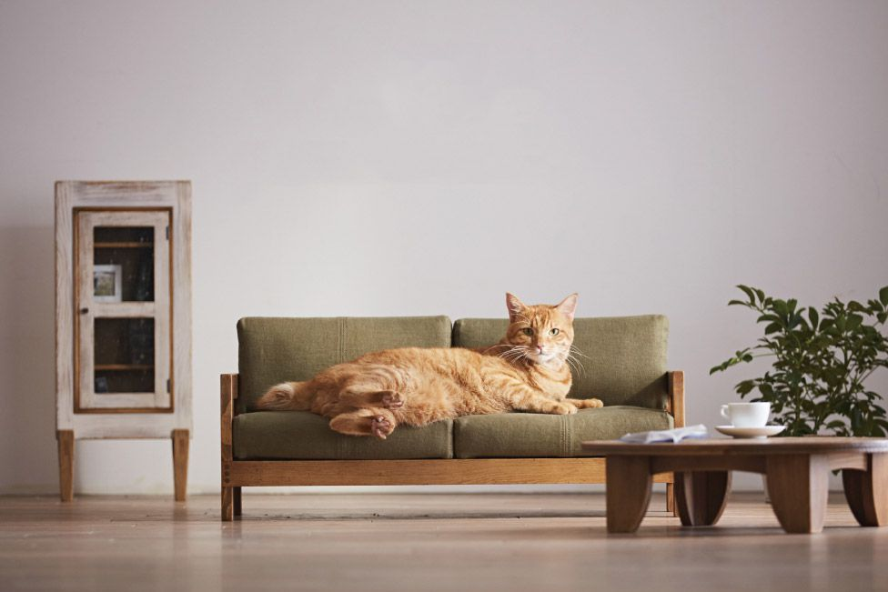 This range of designer furniture has been created especially for cats