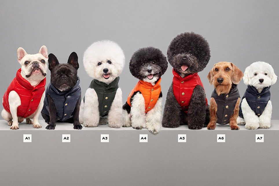 Moncler has released a line of designer puffer jackets for dogs