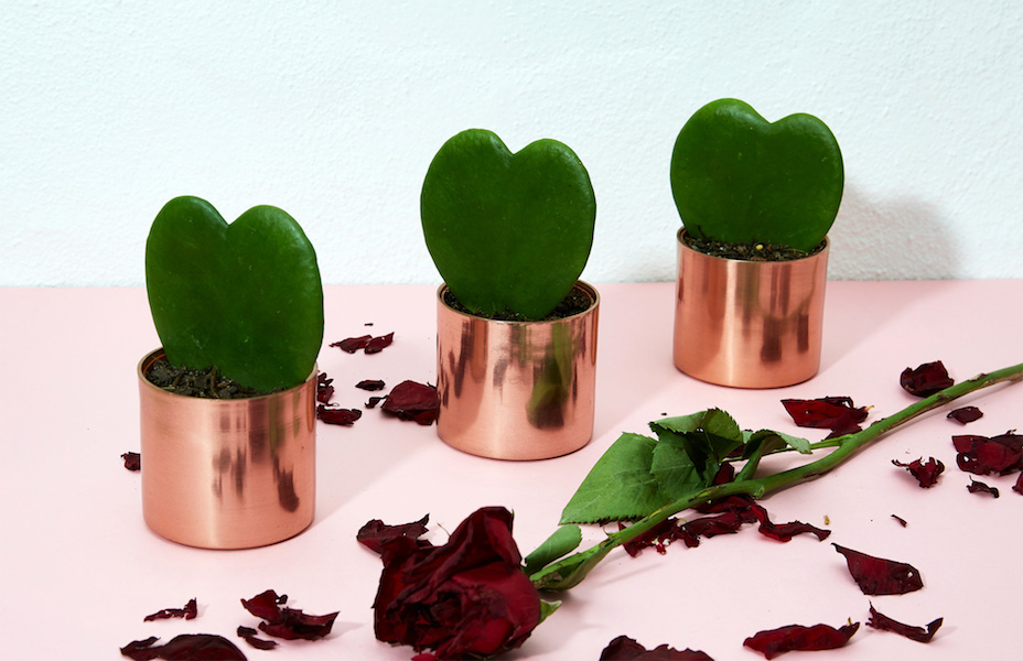 Gift your lover a heart-shaped succulent this Valentine's Day