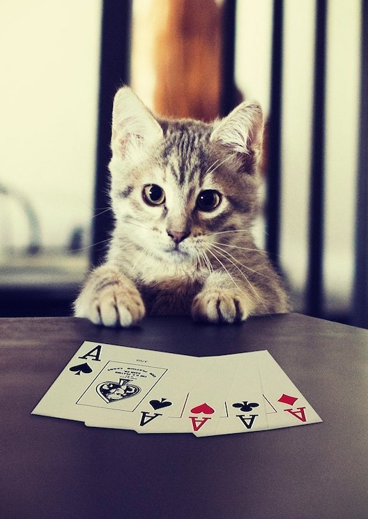 Save cats IRL by playing this card game