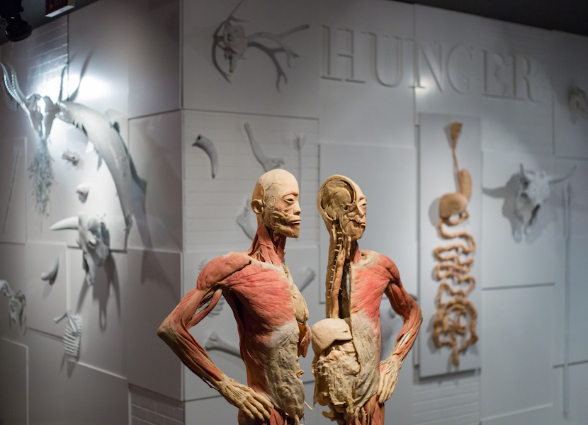 An Exhibition Featuring Real Dead Bodies Has Arrived In Australia