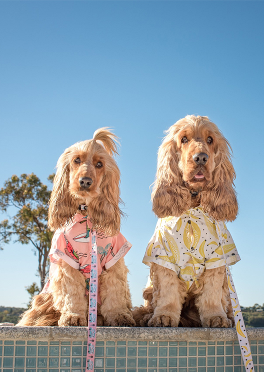 Dog-lovers can now buy shirts to outfit coordinate with their pup
