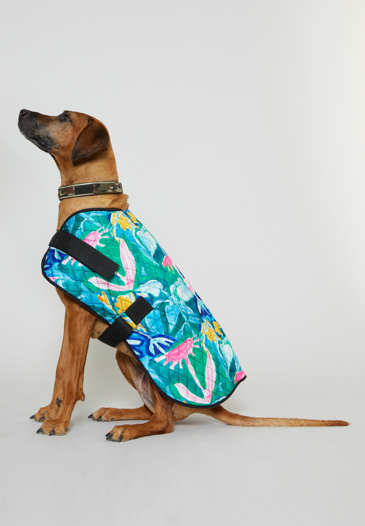 Gorman launches limited-edition dog coats in collaboration with PetRescue